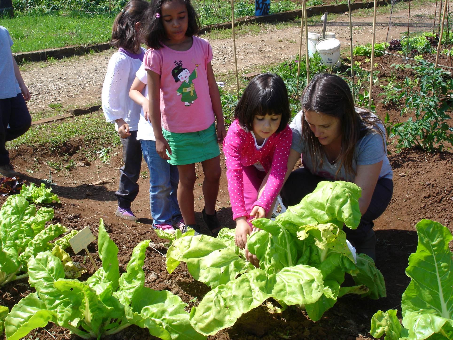 El huerto en el jard n infantil mucho m s que un huerto for Plantas beneficiosas para el huerto