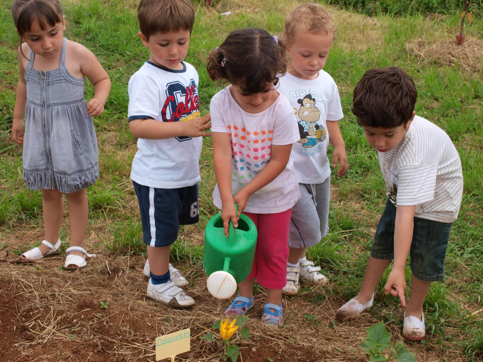 El huerto en el jard n infantil mucho m s que un huerto for Actividades para jardin infantil